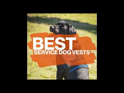 Working Service Dog Vests and Supplies Preview