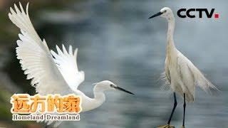 《远方的家》 20190829 厦门珍稀海洋物种国家级自然保护区 鹭岛生灵| CCTV中文国际
