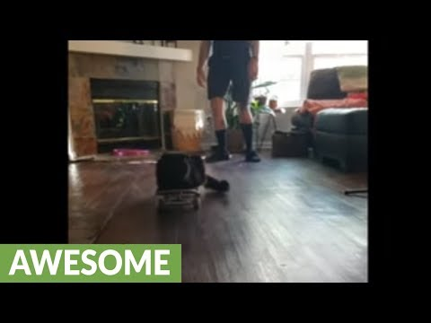 Cat enjoys being casually pushed on skateboard