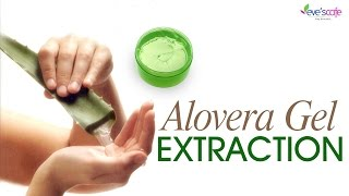 Extracting Aloe Vera Gel from the Plant - DIY