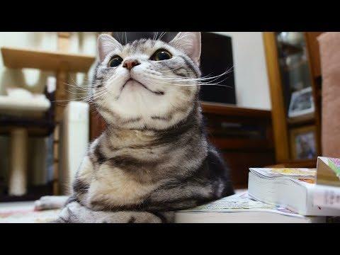 問いかけに「にゃ~!」お返事が完璧すぎる猫