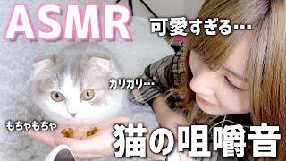 【ASMR】ねこがカリカリ&チュールを食べる音が可愛すぎる。【癒し音】