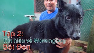 T2: Sói Đen - Giống WorkingDog/ Trò Chuyện với Chuyên Gia/ Chó đẹp/NhamTuatTV-Dog iฑ Vietnam