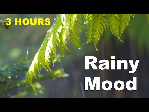 Soft Jazz: 3 Hours of Rainy Mood Smooth Jazz Saxophone Music and Rain Sounds Relaxing Chill Music