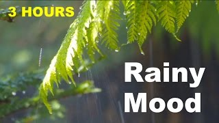 soft jazz 3 hours of rainy mood smooth jazz saxophone music and rain sounds relaxing chill music