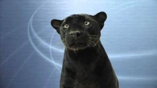 Everybody's Changing w/lyrics - Keane (AUDIO) Panther Song II =^.^=