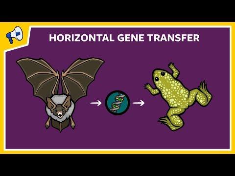what-is-horizontal-gene-transfer?