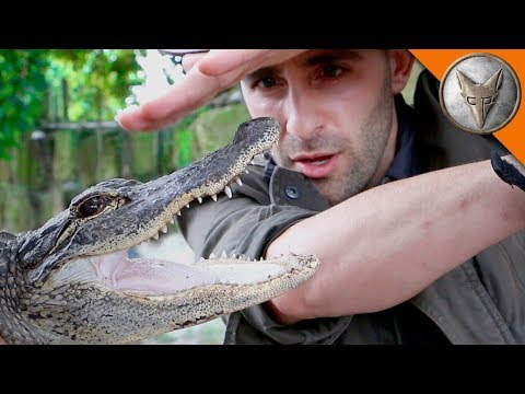 Thumbnail: ALLIGATOR BITE!