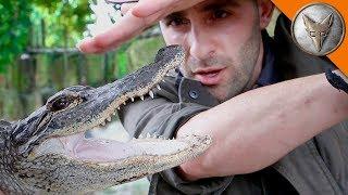 Alligator Bite!