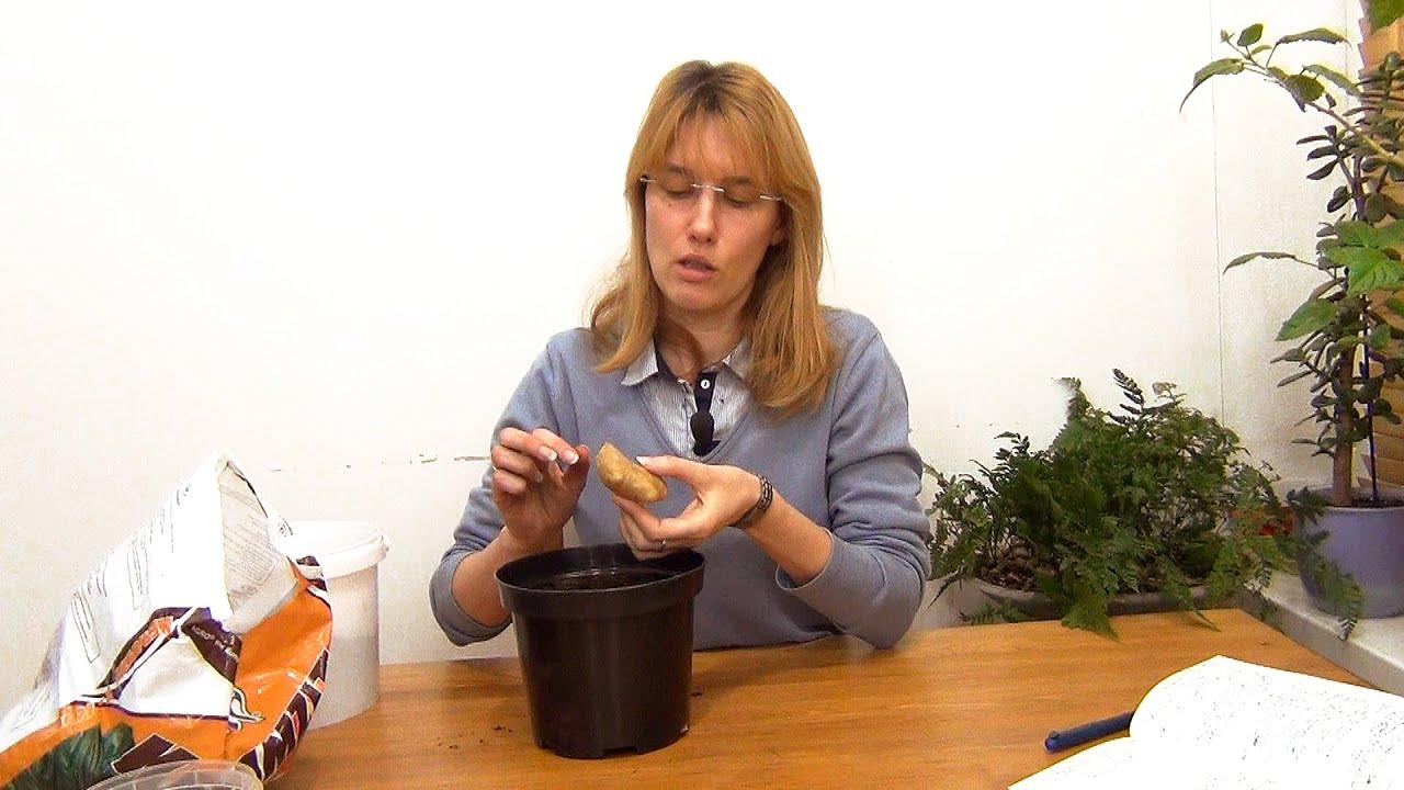 Интернет магазин перекресток предлагает купить имбирь wike маринованный 100г в москве с доставкой на дом. На нашем сайте вы можете заказать.