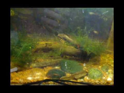 Все о воде в аквариумах (жесткость, ракушки, камни, грунт) Зоомагазин Амфибия Тамбов