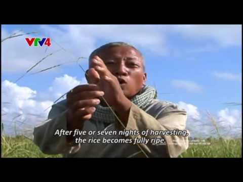 Chronicle - The Western Region during the flooding season - Episode 15 + 16