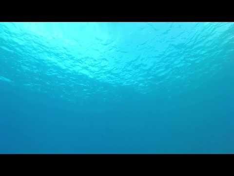 Say Hello (Scuba Diving in Malta)