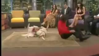 Собака танцует с человеком ,человек собаке друг?