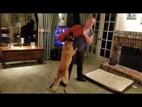 So, you're sure you want a Malinois?