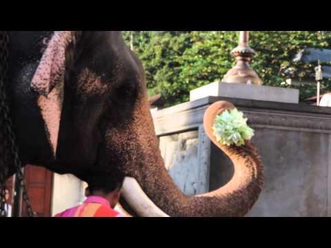 Raja Elephant worshiping Sri Dalada Maligawa