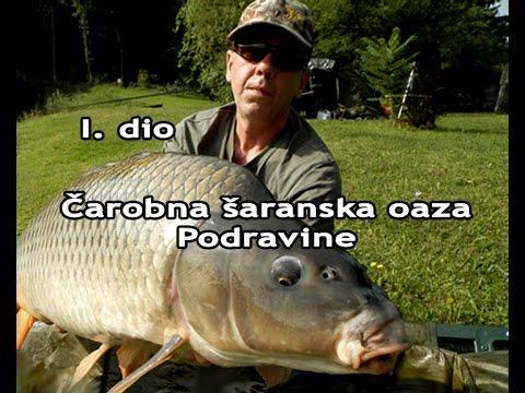 ŠARANski ribolov_Jezero Drnić / Čarobna šaranska oaza Podravine 1. dio