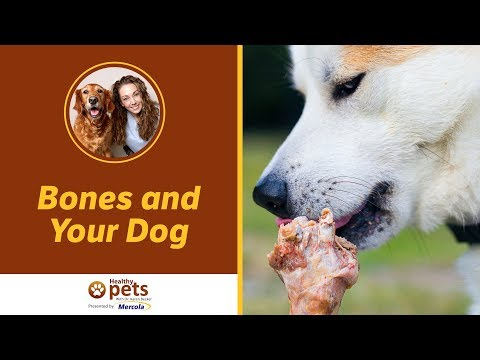 Dr. Becker: Bones and Your Dog (Part 1)