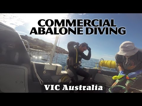 Commercial Abalone Diving - Gabo Island, VIC Australia