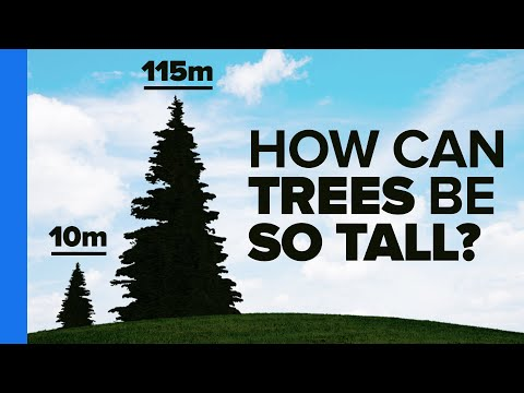 The Most Amazing Thing About Trees