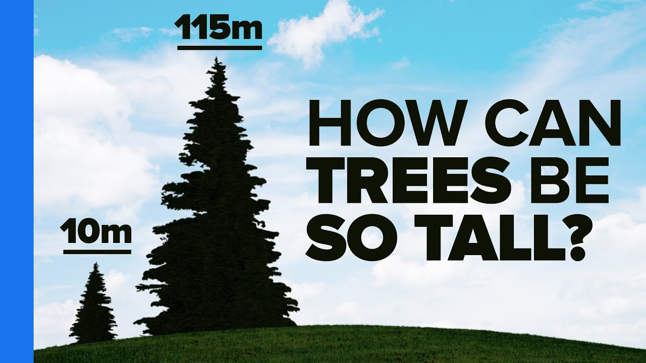 the most amazing thing about trees youtube