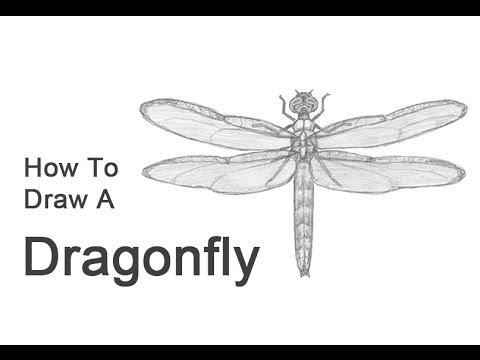 How to draw a dragonfly youtube