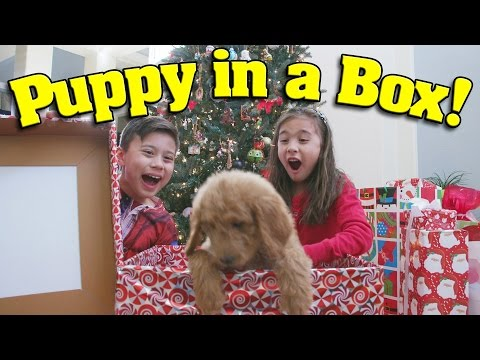 PUPPY IN A BOX Christmas Haul & Surprise Unboxing ft PuppyTube What We Got For Christmas