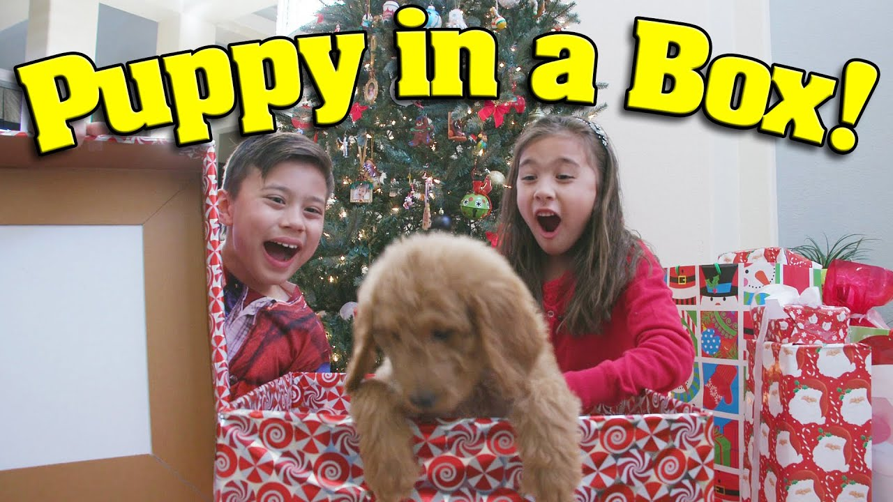 PUPPY IN A BOX! Christmas Haul & Surprise Unboxing ft. PuppyTube ...