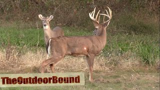 AWESOME HEART  Crossbow vs Whitetail Buck