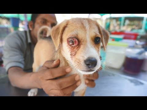 Sweetest puppy with extremely painful infected eye rescued