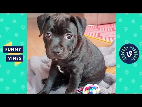 TRY NOT TO LAUGH – Ultimate FUNNY & CUTE Animal Videos Compilation | Funny Vines July 2018