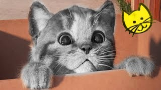 Little Kitten Preschool Adventure Educational Kids Games - My Favorite Cat Care Learning Gameplay