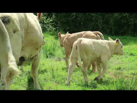 BETTER farm: Philip Keville talks breeding