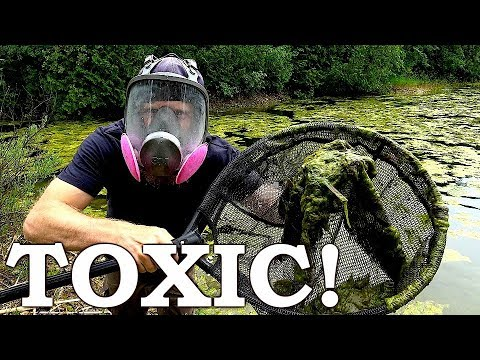 TOXIC SLUDGE In My POND (Bad News!) | We Need To Get Ride Of This Algae QUICKLY!