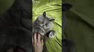 Кот - пирожок 😆   Смешной кот   Короткие Приколы   Коты и Кошки
