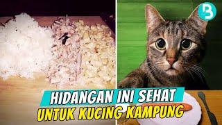 Inilah Makanan Minuman Yang Sehat Untuk Kucing Kampung