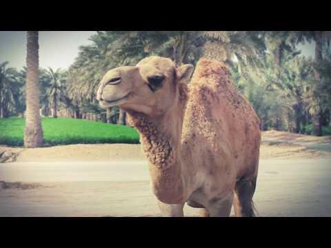 Tobu - Desert Voices