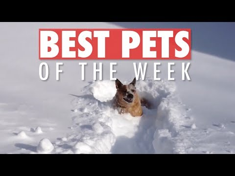 Best Pets of the Week | November 2018 Week 2