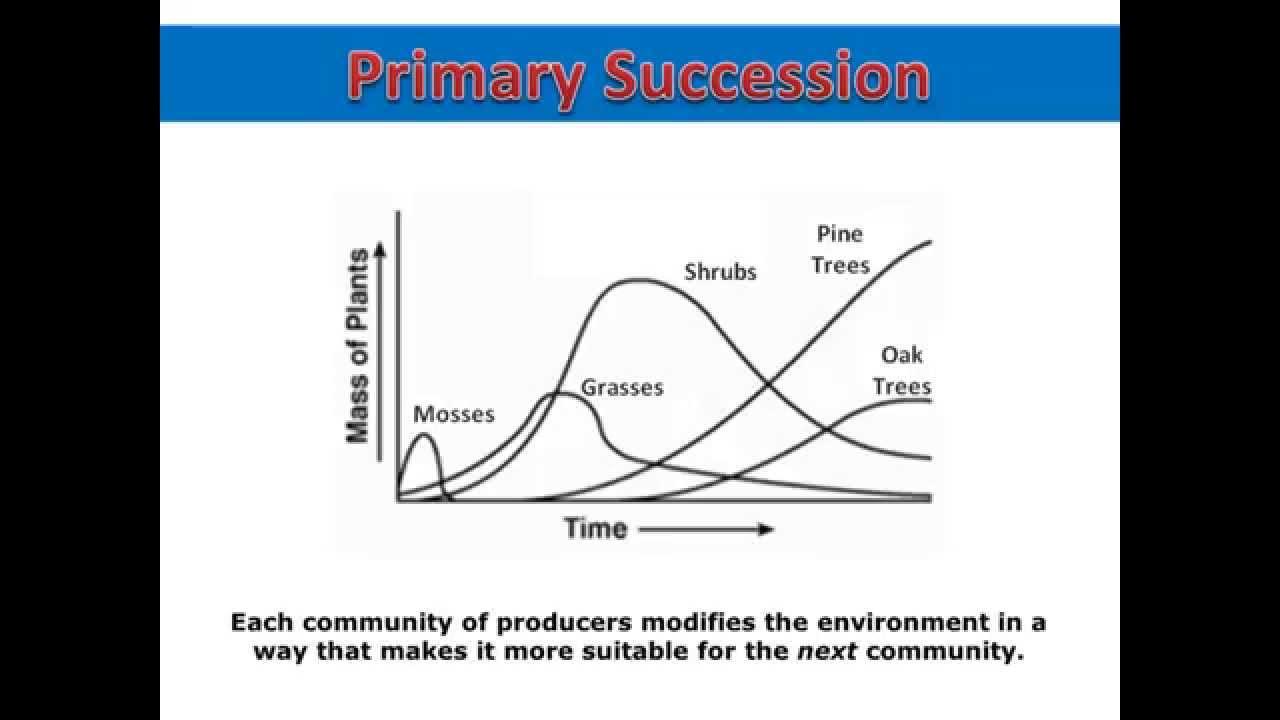 Primary Succession Graph