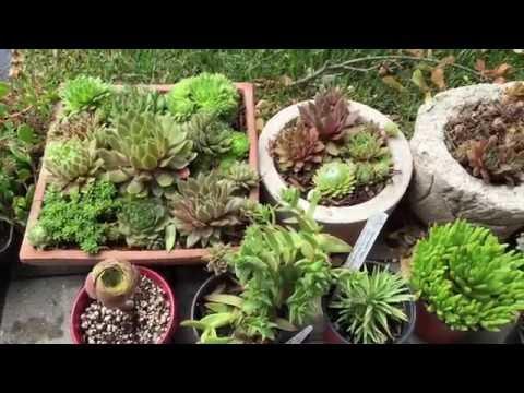 Lynn Krawczyk outdoor succulent garden - YouTube
