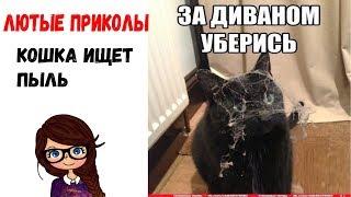 Угарные мемы! Кошка ищет пыль/ Ира Смайл / лютые приколы/ ржачные мемасы/ девушка читает мемы