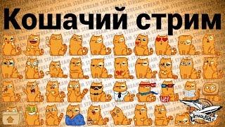 Стрим - Кошачий