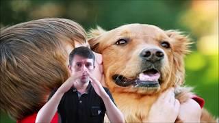 Какие запахи не любят собаки