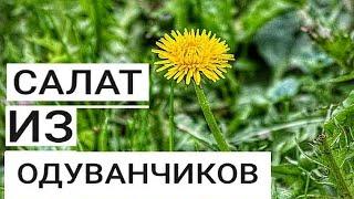 Салат из Одуванчиков. Как Приготовить Полезный Весенний Корейский Салат за 0 рублей.