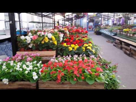 Рижский центральный рынок. Как продают цветочную рассаду в розницу.