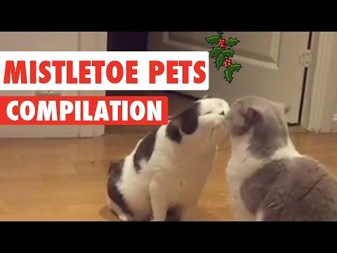 Mistletoe Pets Video Compilation 2016