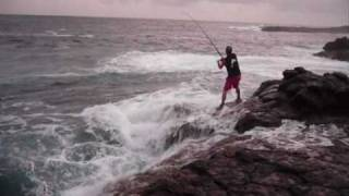 Caranx Latus 20lbs Spinning On the Rocks