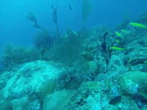 Barbados Reef and Tiny Fish