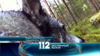 Собака засняла на видео бой с двумя волками