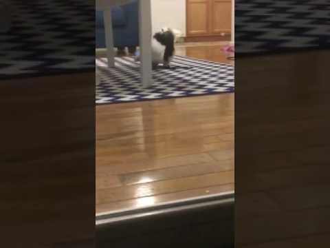 Cat Jumps like a Bunny!